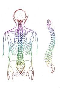 Uw lichaam heeft een dubbele S-vorm.