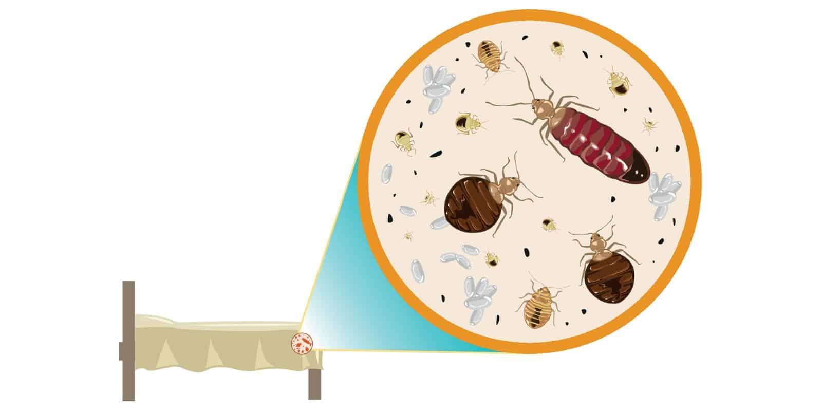 Het afnemende absorberend en ventilerend vermogen van uw matras vergroot de kans op schimmels.