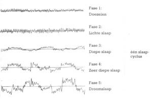 De slaapcyclus kent verschillende fasen. De REM slaap is de laatste fase van de cyclus.